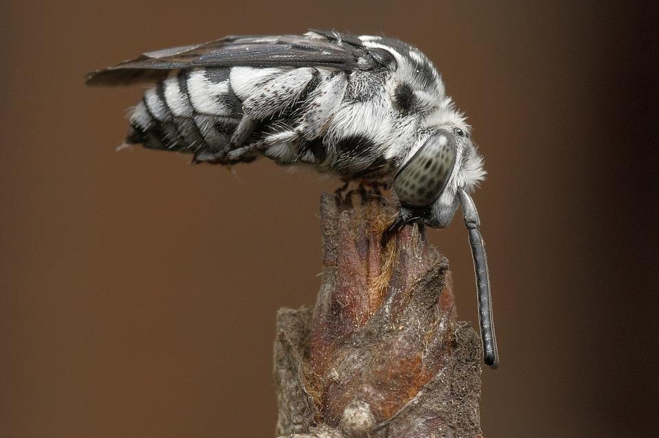 moth-498742_960_720.jpg