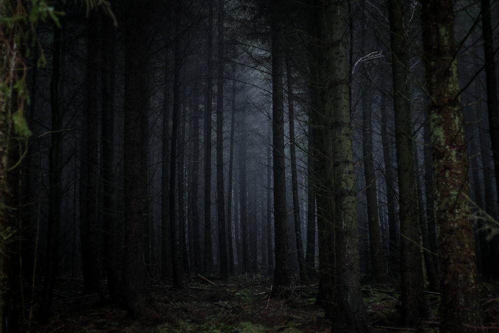 IMG-Darkwoods.png