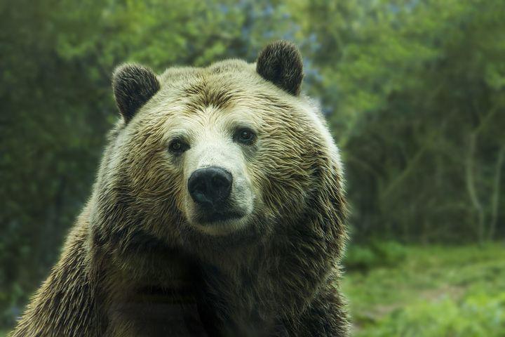 bear-1245807__480.jpeg