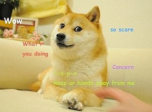 300px-Original_Doge_meme.jpg